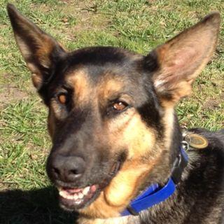 Jackie Wonder Dog